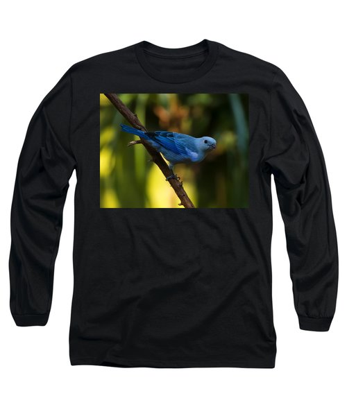Blue Grey Tanager Long Sleeve T-Shirt by Chris Flees