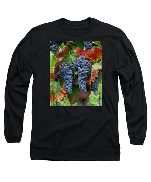 5b6374-cabernet Sauvignon Grapes At Harvest Long Sleeve T-Shirt