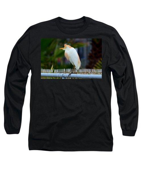 Long Sleeve T-Shirt featuring the photograph Cattle Egret Breeding Plumage by Debra Martz