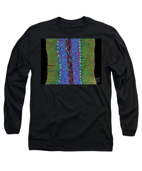 Cerebellum, Fluorescent Lm Long Sleeve T-Shirt