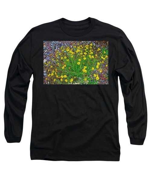 Chinchweed In Big Bend National Park-texas Long Sleeve T-Shirt