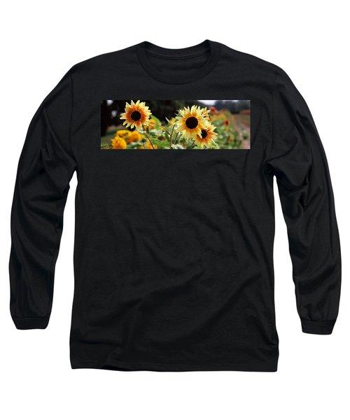 Close-up Of Sunflowers Helianthus Annuus Long Sleeve T-Shirt