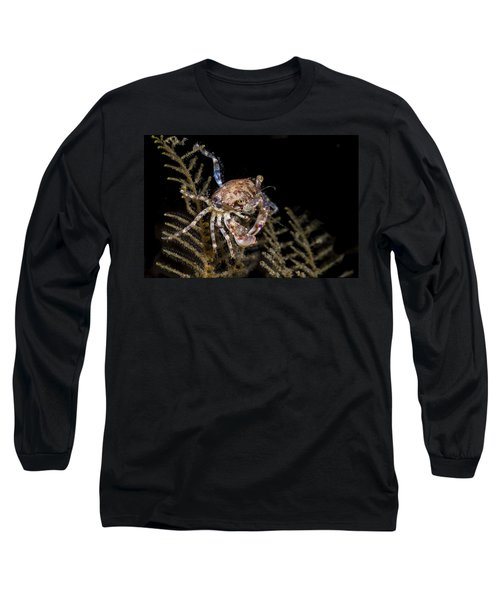Crab Sitting At Night Long Sleeve T-Shirt