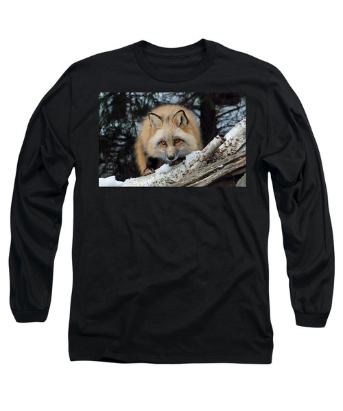 Curious Fox Long Sleeve T-Shirt by Richard Bryce and Family