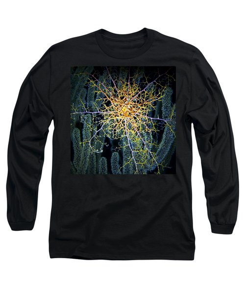 Giant Basket Star At Night Long Sleeve T-Shirt by Amy McDaniel