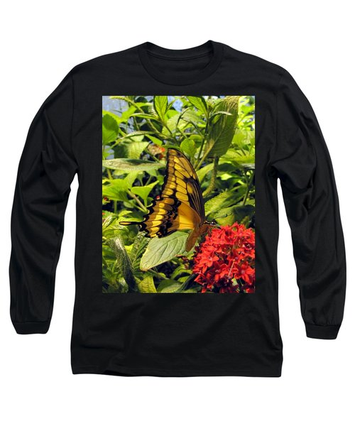 Gold Giant Swallowtail Long Sleeve T-Shirt by Jennifer Wheatley Wolf