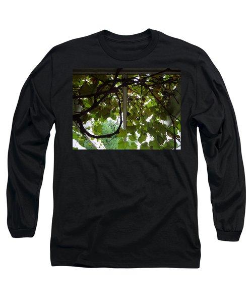Long Sleeve T-Shirt featuring the photograph Gropius Vine by Joseph Skompski