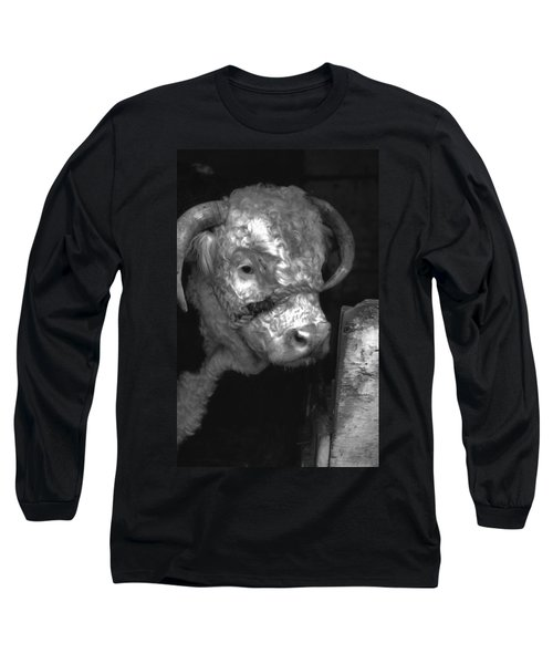 Hereford Bull In Black And White Long Sleeve T-Shirt by Cathy Anderson