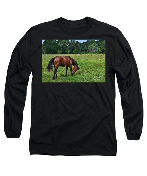 Horse In Holland Michigan Long Sleeve T-Shirt