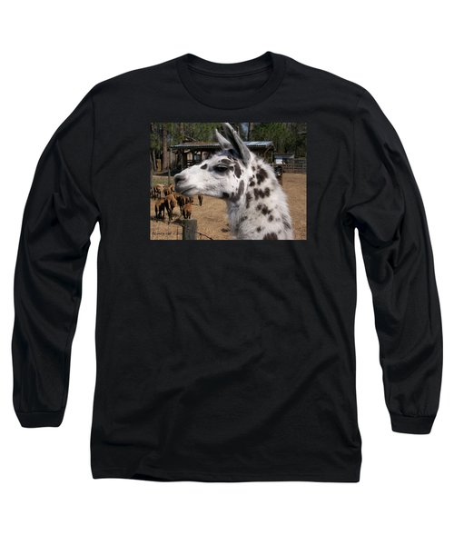 Long Sleeve T-Shirt featuring the photograph Mad Llama Rules by Belinda Lee