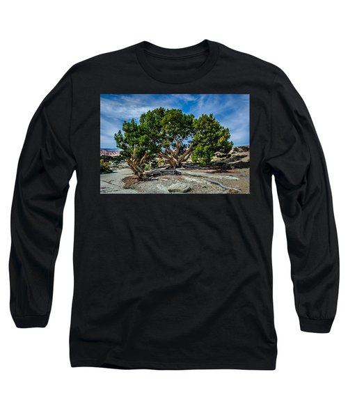 Limber Pine Long Sleeve T-Shirt