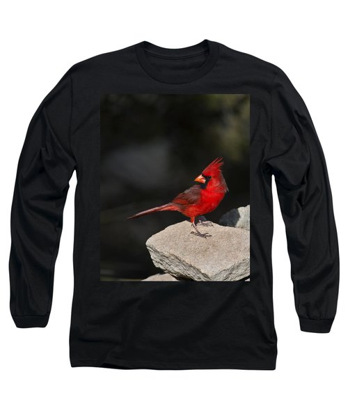 Male Cardinal Long Sleeve T-Shirt by Gary Langley