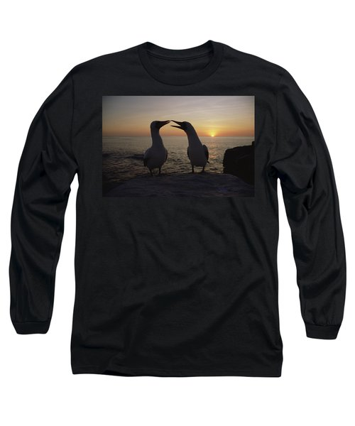 Masked Booby Couple Courting Galapagos Long Sleeve T-Shirt by Konrad Wothe