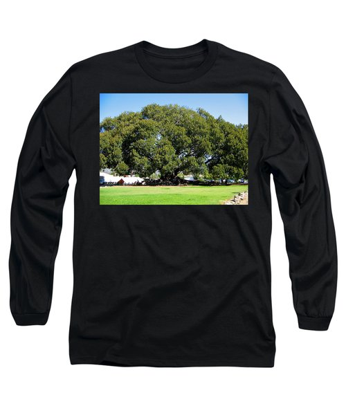 Moreton Fig Tree In Santa Barbara Long Sleeve T-Shirt