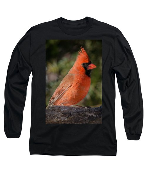 Northern Cardinal 2 Long Sleeve T-Shirt by Kenneth Cole