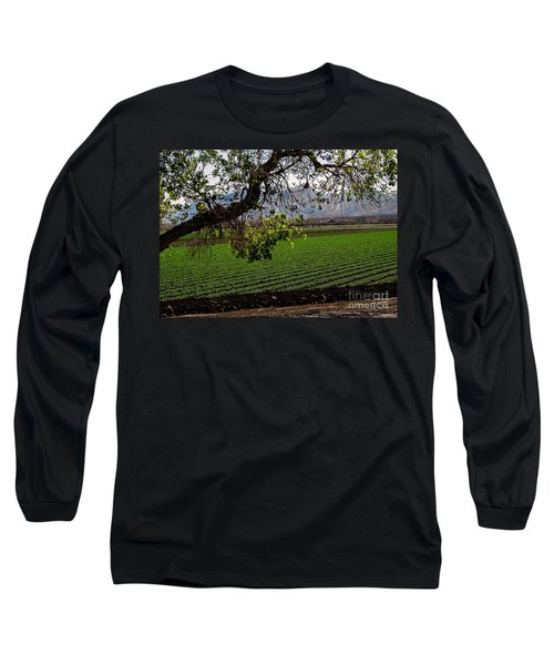 Panoramic Of Winter Lettuce Long Sleeve T-Shirt by Robert Bales
