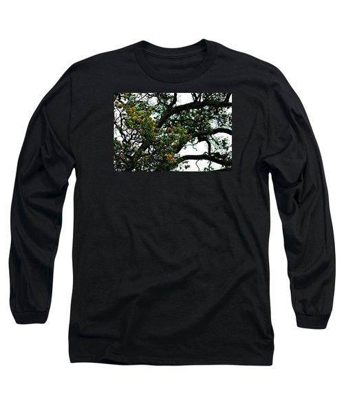 Red Ohia Lehua Tree Long Sleeve T-Shirt by Lehua Pekelo-Stearns