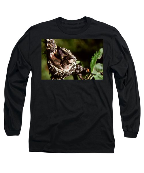 Rufous Hummingbirds In Nest Long Sleeve T-Shirt