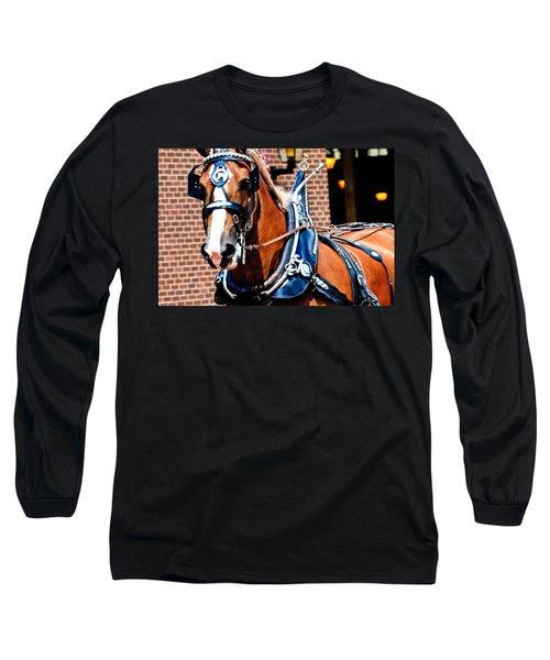 Show Horse Long Sleeve T-Shirt
