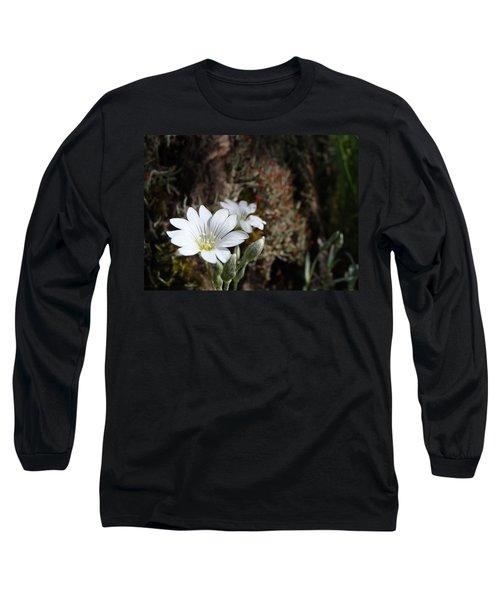 Snow In Summer Long Sleeve T-Shirt