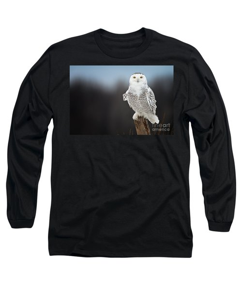 Snowy Owl Pictures 13 Long Sleeve T-Shirt