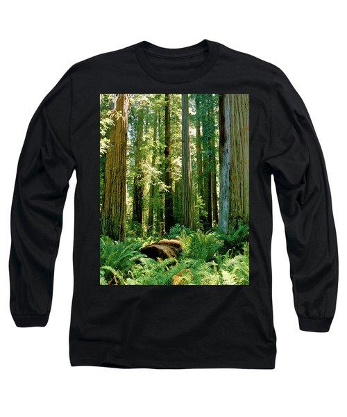 Stout Grove Coastal Redwoods Long Sleeve T-Shirt by Ed  Riche