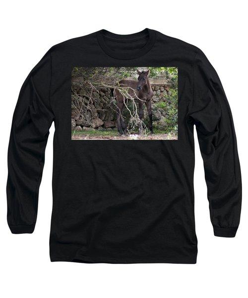 sweet heart - A tender foal wait his beloved mother  Long Sleeve T-Shirt
