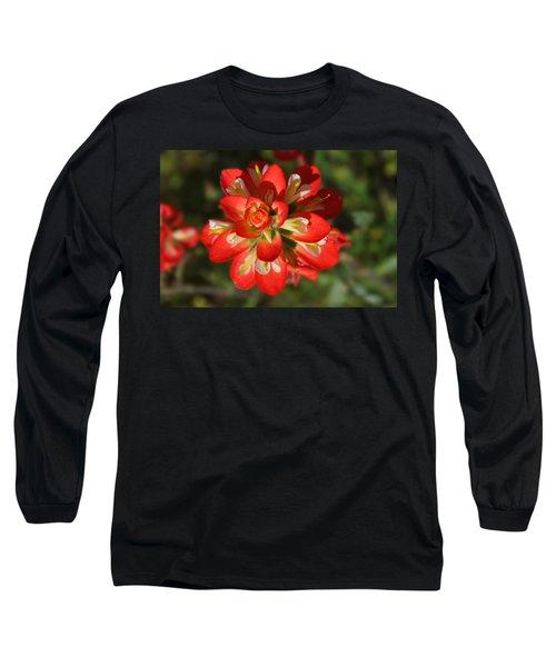 Texas Paintbrush Long Sleeve T-Shirt by Lynn Bauer