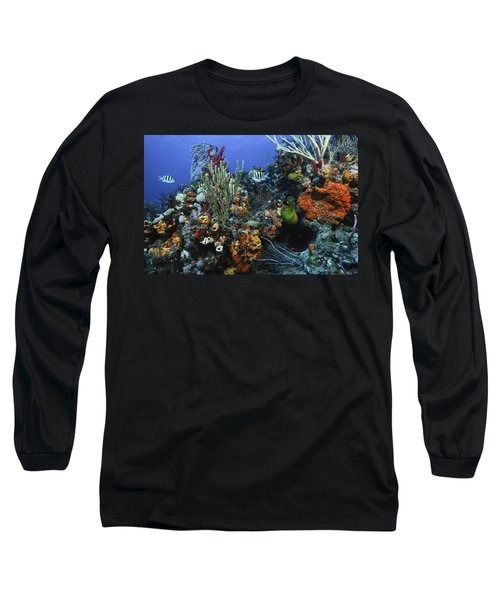 The Busy Reef Long Sleeve T-Shirt