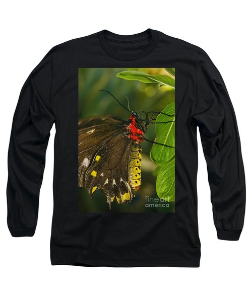 Long Sleeve T-Shirt featuring the photograph Troides Helena Butterfly  by Olga Hamilton