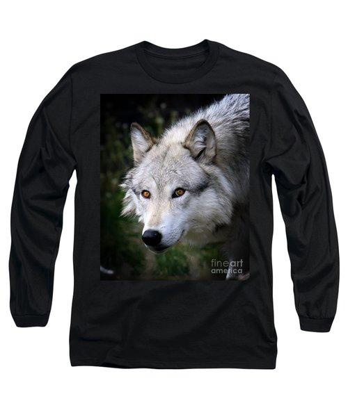 Wolf Stare Long Sleeve T-Shirt by Steve McKinzie