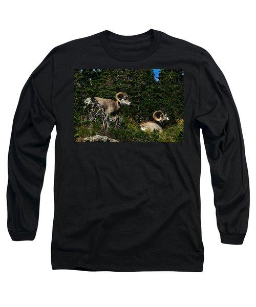 Big Horn Sheep Glacier National Park Long Sleeve T-Shirt