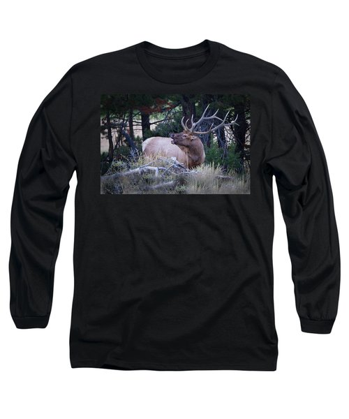 Bugling Bull Elk Long Sleeve T-Shirt by Ronald Lutz