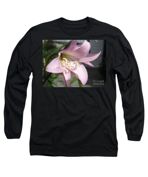 Crinum Lily Named Powellii Long Sleeve T-Shirt by J McCombie