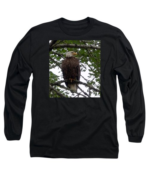 Long Sleeve T-Shirt featuring the photograph Eagle At Hog Bay Maine by Francine Frank