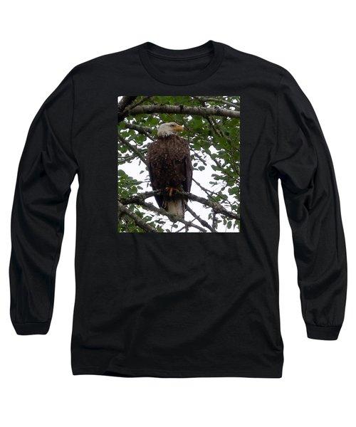 Eagle At Hog Bay Maine Long Sleeve T-Shirt