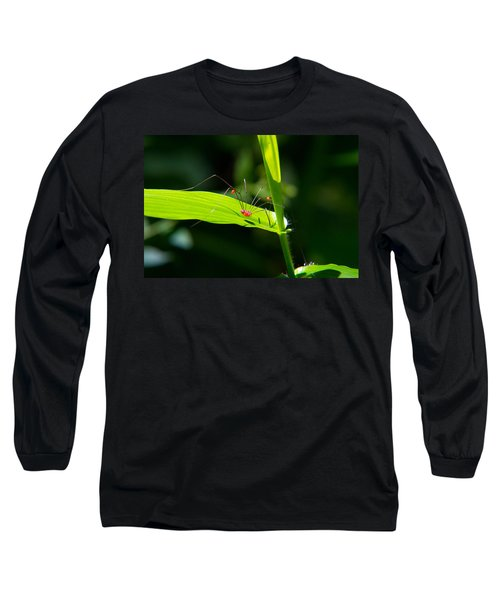 Itsy Bitsy Spider Long Sleeve T-Shirt