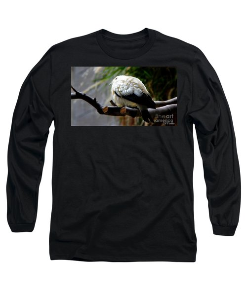 Long Sleeve T-Shirt featuring the photograph Pied Imperial Pigeon by Davandra Cribbie