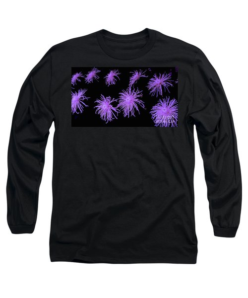 Chrysanthemums In Purple Long Sleeve T-Shirt