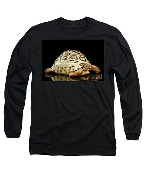 Closeup Leopard Tortoise Albino,stigmochelys Pardalis Turtle With White Shell On Isolated Black Back Long Sleeve T-Shirt by Sergey Taran