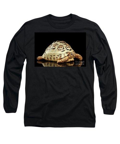 Closeup Leopard Tortoise Albino,stigmochelys Pardalis Turtle With White Shell On Isolated Black Back Long Sleeve T-Shirt