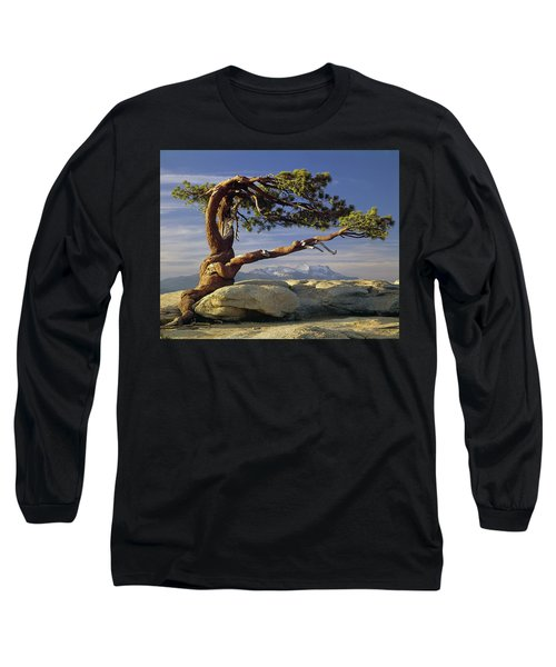 1m6701 Historic Jeffrey Pine Sentinel Dome Yosemite Long Sleeve T-Shirt