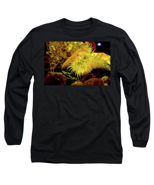 Sea Urchins Long Sleeve T-Shirt