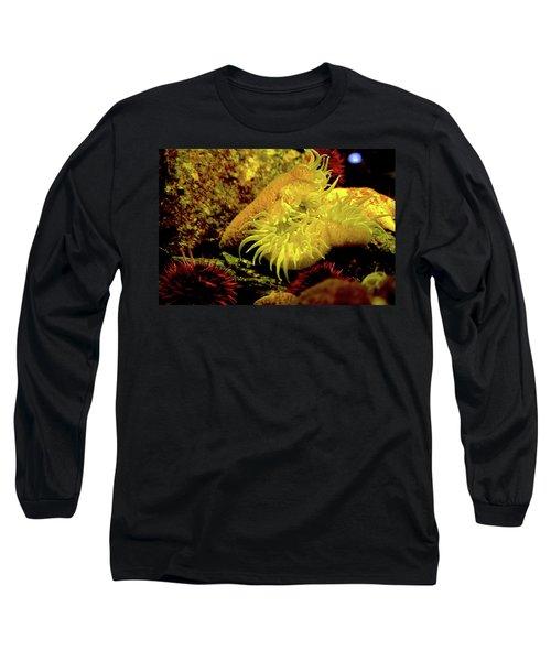 Sea Urchins Long Sleeve T-Shirt