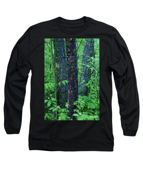 3 Trees Long Sleeve T-Shirt