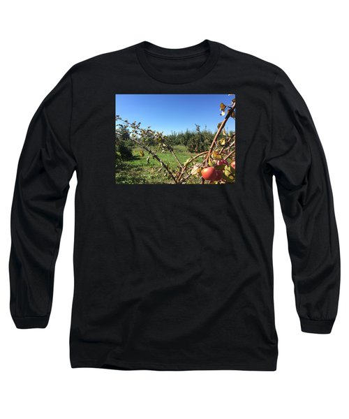 Apple Orchard 1 Long Sleeve T-Shirt by Jason Nicholas