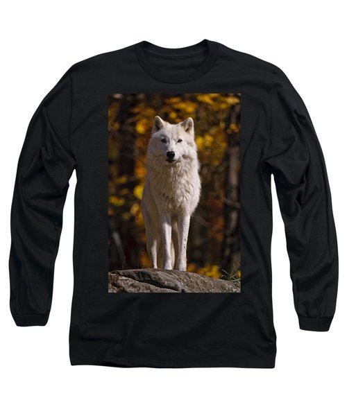 Long Sleeve T-Shirt featuring the photograph Arctic Wolf On Rocks by Michael Cummings