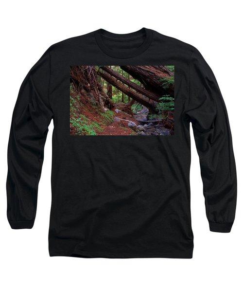 Big Sur Redwood Canyon Long Sleeve T-Shirt