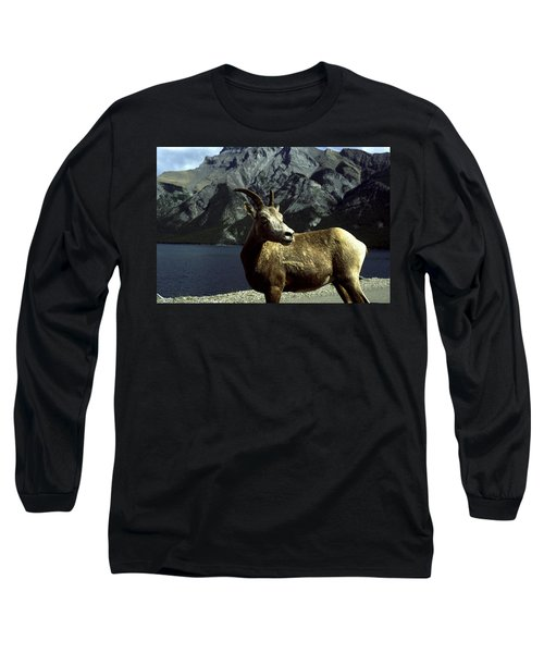 Long Sleeve T-Shirt featuring the photograph Bighorn Sheep by Sally Weigand