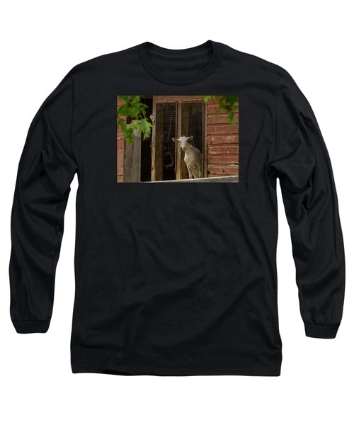Billy Goat Long Sleeve T-Shirt by Dan Traun